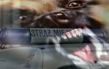 Trzy agresywne psy, które pogryzły dotkliwie kilka osób, wyłapali strażnicy miejscy