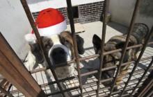 Mikołajowa zbiórka karmy dla zwierząt z krakowskiego schroniska