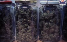 Kolejni  pseudokibice zajmujący się dystrybucją narkotyków zostali zatrzymani. Policjanci zabezpieczyli 7kg marihuany