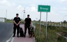 Policyjne psy gotowe do pracy podczas Światowych Dni Młodzieży