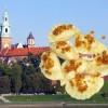 Krakowscy restauratorzy liczyli na więcej. ŚDM nie przyniosły im większych zysków