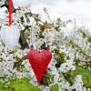 Światowy Dzień Serca w Krakowie