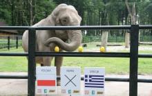 POLSKA WYGRA MECZ OTWARCIA! - tak wytypowała słonica Citta [ zdjęcia ]