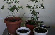 Wadowice: Zatrzymani za narkotyki