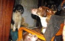 Kraków: Dręczyła zwierzęta zamiast się nimi opiekować