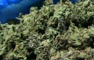 Policjanci zabezpieczyli blisko 200 działek dilerskich metamfetaminy oraz susz marihuany