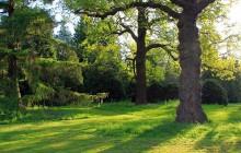 Posadź drzewo w Parku Krakowian