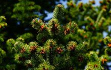 Zarząd Zieleni Miejskiej - Sadzimy świąteczne drzewka