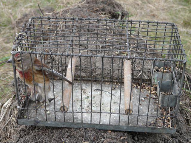 Policja: Kłusowali na chronione gatunki ptaków