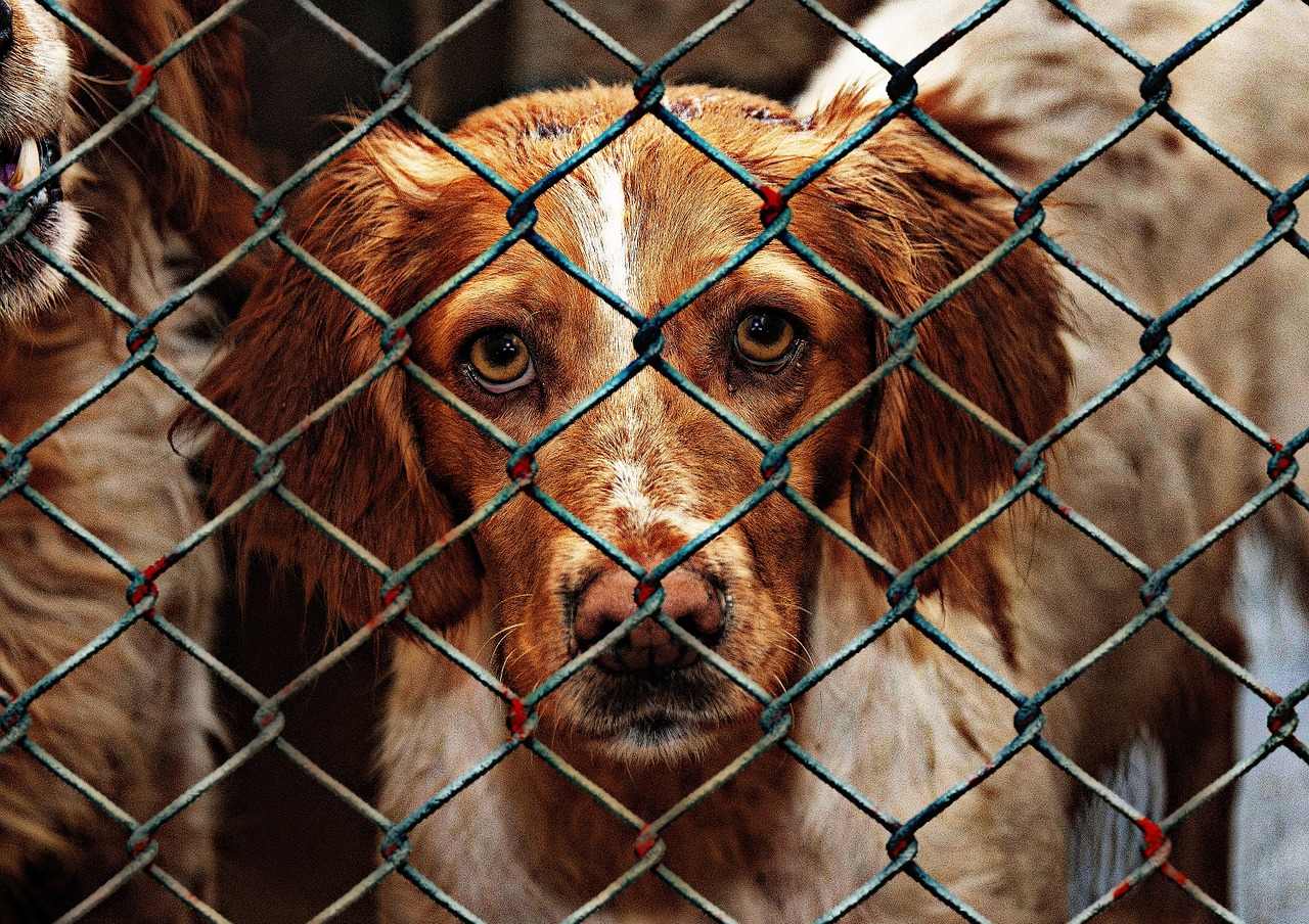 Jest szansa na wykonawcę dla przebudowy schroniska dla zwierząt