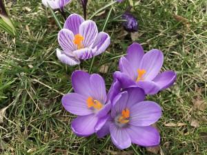 Wiosna w Krakowie